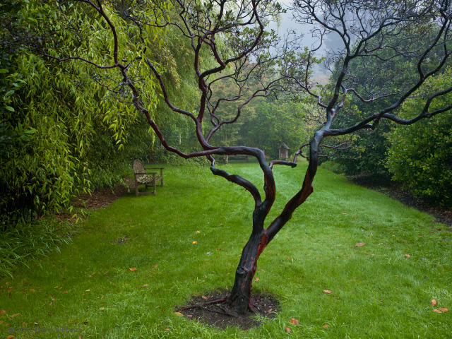 A Quiet Corner of the Garden - © 2011 David Hibbard