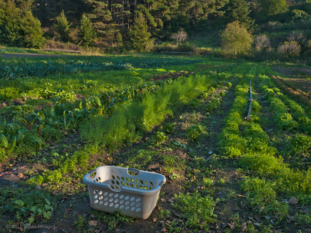 Field Basket - © 2011 David Hibbard