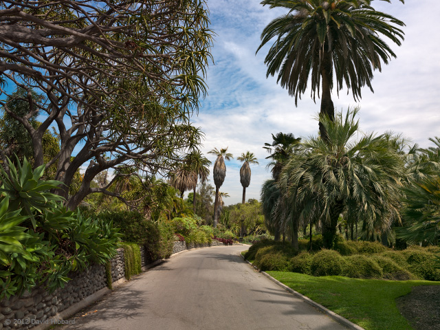 Huntington Gardens 1 - © 2012 David Hibbard