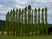 Thirteen Thin Trees, Vézère Valley