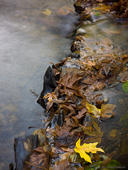 Bunched Leaves and Stream