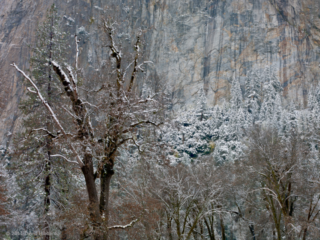 Trees and Cliffs in Snow - © 2011 David Hibbard