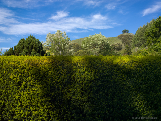 Hedge and Shadows 1 - © 2011 David Hibbard
