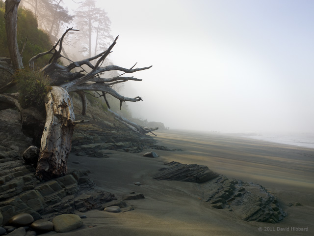 Driftwood Tree, Morning Shadows - © 2011 David Hibbard