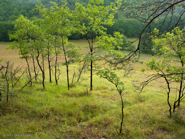 Field and Young Trees, Vézère Valley - © 2011 David Hibbard
