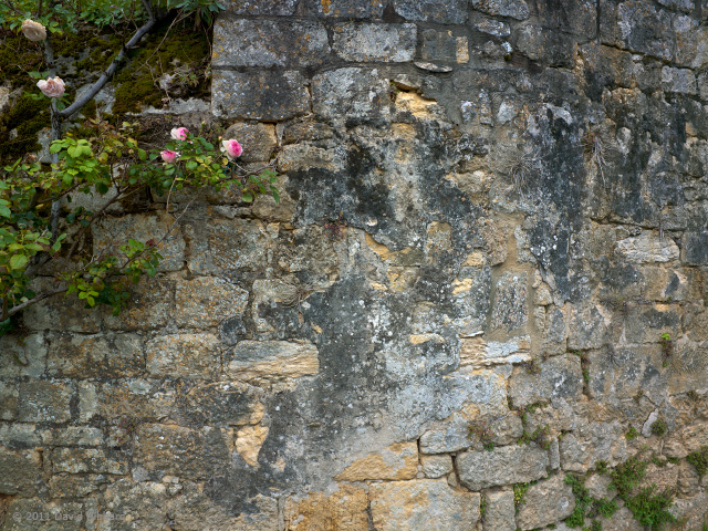 Roses and Wall, Domme - © 2011 David Hibbard