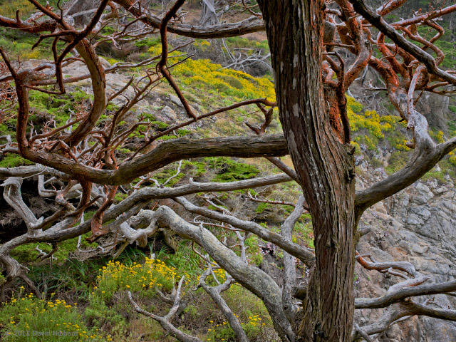 Tangled Trees - © 2011 David Hibbard