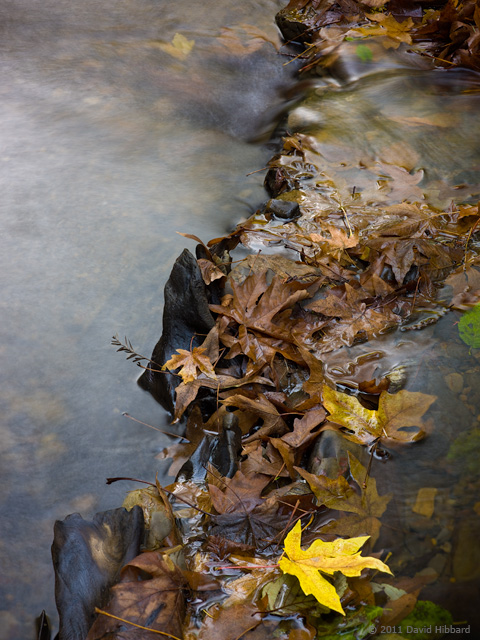 Bunched Leaves and Stream - © 2011 David Hibbard