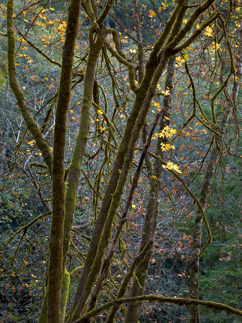 Dangling Leaves and Branches - © 2011 David Hibbard