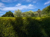 Hedge and Shadows 1